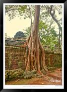 Trees of Angkor Thom - 012 - Jonathan va