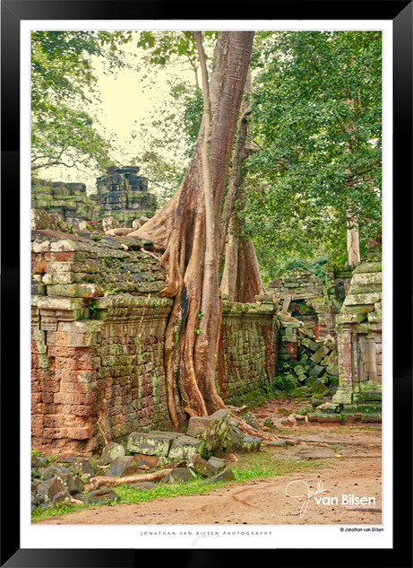 Trees of Angkor Thom - 011 - Jonathan va