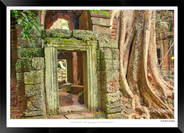 Trees of Angkor Thom - 006 - Jonathan va