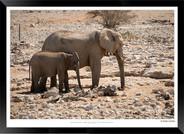 Elephants_of_Etosha_-_012_-_©_Jonathan_v