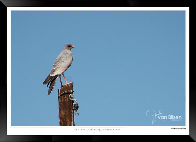 Birds_of_Namibia_-_025_-_©_Jonathan_van