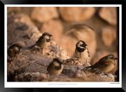 Birds_of_Namibia_-_028_-_©_Jonathan_van