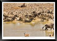 Zebras of Africa - 027 - © Jonathan van