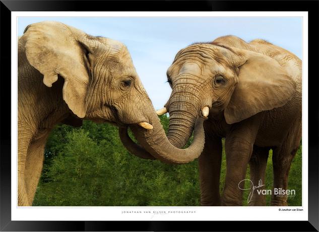 Elephants_of_the_Serengeti_-_001_-_©_Jo