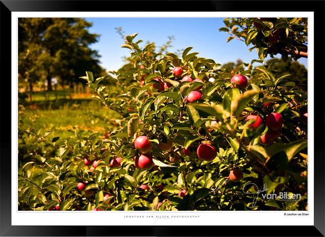 Orchard - IOPP-072 - Jonathan van Bilsen