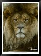 Cats_of_Africa_-_008_-_©_Jonathan_van_B