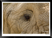 Elephants_of_the_Serengeti_-_007_-_©_Jo