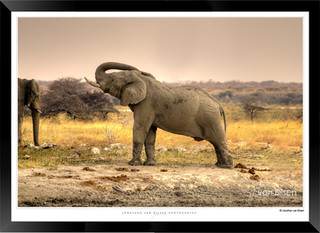 Elephants_of_Etosha_-_003_-_©_Jonathan_v