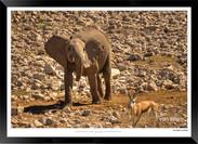 Elephants_of_Etosha_-_014_-_©_Jonathan_v