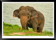 Elephants of Sri Lanka -  002 - ©Jonathan van Bilsen.jpg