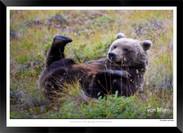 Images of Alaska - IOAL-013.jpg