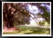 Images of Charleston -  IOSC- 008.jpg