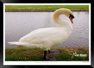 Images_of_Hampton_Court_-_010_-_©Jonath