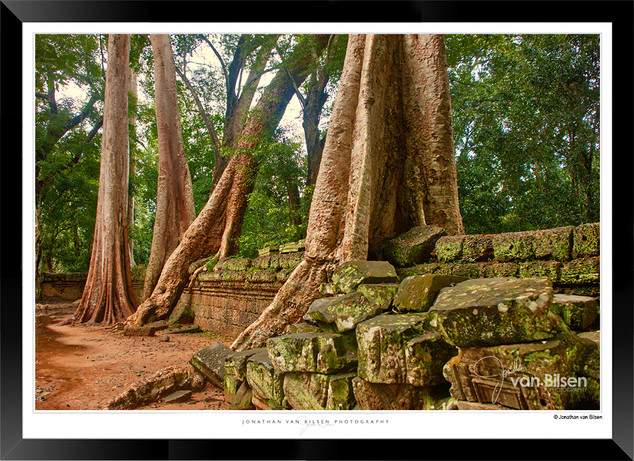 Trees of Angkor Thom - 023 - Jonathan va