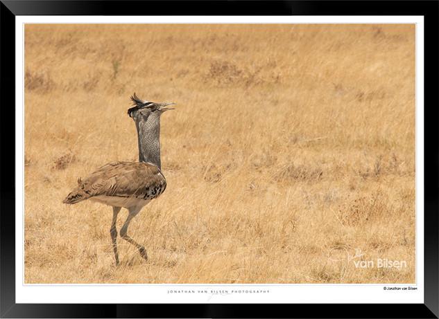 Birds_of_Namibia_-_019_-_©_Jonathan_van