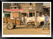 Images_of_Delhi_-__009_-_©Jonathan_van_
