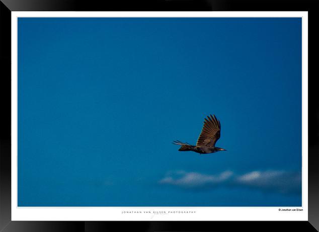 Images of Ararat - 008 - ©Jonathan van B