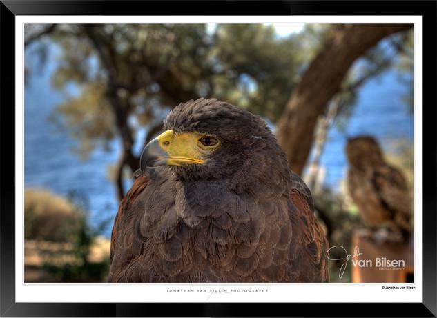Images of Malta - 005 - Jonathan van Bil