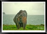 Elephants of Sri Lanka -  018 - ©Jonathan van Bilsen.jpg