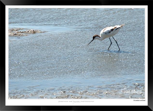 Birds_of_Namibia_-_017_-_©_Jonathan_van