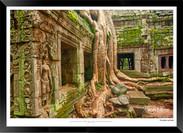 Trees of Angkor Thom - 027 - Jonathan va