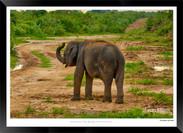 Elephants of Sri Lanka -  015 - ©Jonathan van Bilsen.jpg