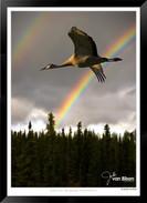 Images of Alaska - IOAL-008.jpg