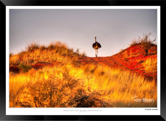 Birds_of_Namibia_-_016_-_©_Jonathan_van