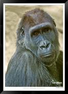 Images of East Africa - 029 - © Jonathan van Bilsen.jpg