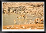 Zebras of Africa - 025 - © Jonathan van