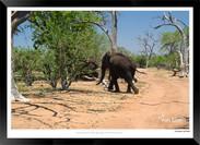 Elephants_of_the_Serengeti_-_009_-_©_Jo