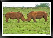 Images of East Africa - 024 - © Jonathan van Bilsen.jpg