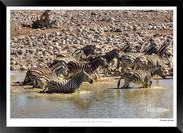 Zebras of Africa - 007 - © Jonathan van