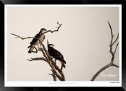 Birds_of_Namibia_-_021_-_©_Jonathan_van