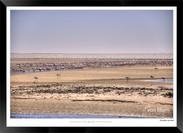 Birds_of_Namibia_-_013_-_©_Jonathan_van