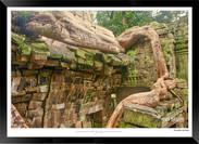 Trees of Angkor Thom - 021 - Jonathan va