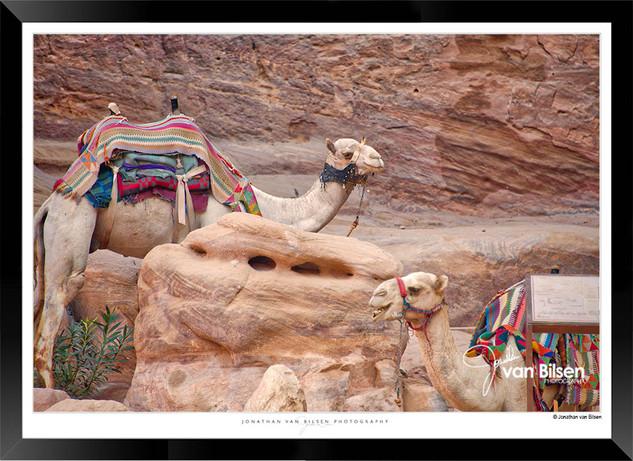 Images_of_Petra_-_014-_©_Jonathan_van_B