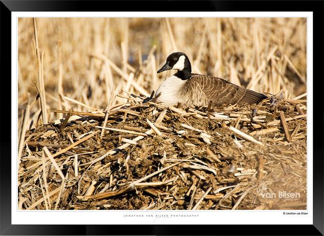 Nesting - F049.jpg
