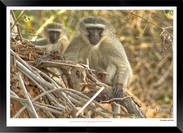 Images of East Africa - 008 - © Jonathan van Bilsen.jpg