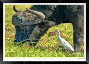 Images of East Africa - 012 - © Jonathan van Bilsen.jpg