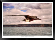Images of the Galapagos Islands - 009 -