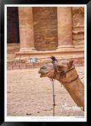 Images_of_Petra_-_008-_©_Jonathan_van_B