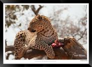 Cats_of_Africa_-_003_-_©_Jonathan_van_B
