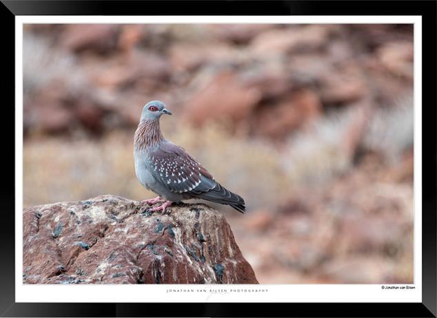 Birds_of_Namibia_-_014_-_©_Jonathan_van