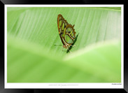 Images of Costa Rica - 001 - © Jonathan
