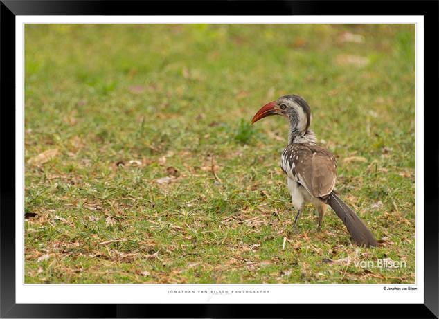 Birds_of_Namibia_-_032_-_©_Jonathan_van