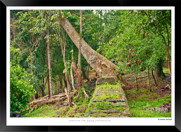 Trees of Angkor Thom - 020 - Jonathan va