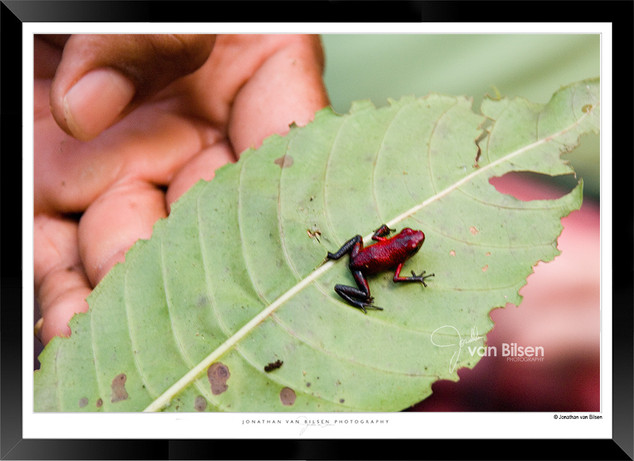 Images_of_Costa_Rica_-_011_-_©_Jonathan_
