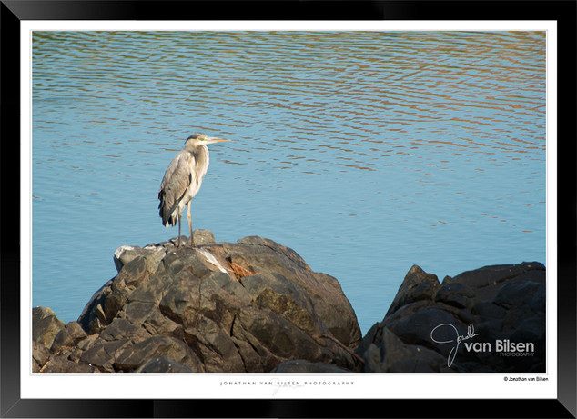 Birds_of_Namibia_-_026_-_©_Jonathan_van