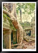 Trees of Angkor Thom - 016 - Jonathan va